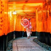 Cosmos   Timeless Japan