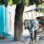 Intrepid   Best of Cuba