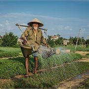 Intrepid | Classic Vietnam