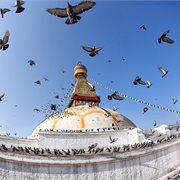 Intrepid | Delhi to Kathmandu