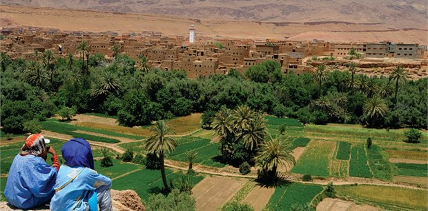 Peregrine | Classic Morocco