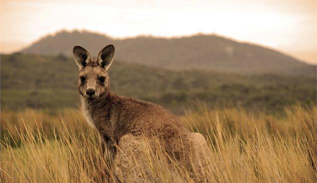 Blog: 30 hours on Kangaroo Island