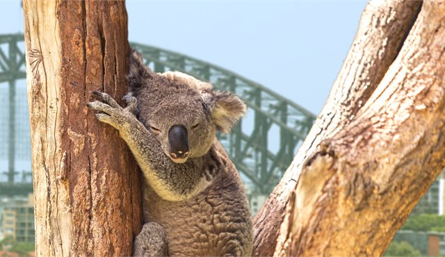 Blog: Top 10 Things To Do: Sydney and NSW