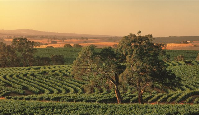 Blog: Explore South Australia