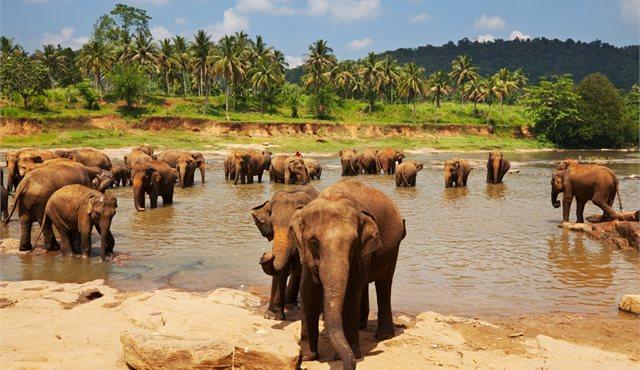 Blog: On the road in Sri Lanka