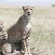 World Journeys   Ngorongoro & the Serengeti