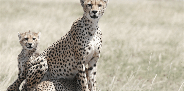 World Journeys | Ngorongoro & the Serengeti