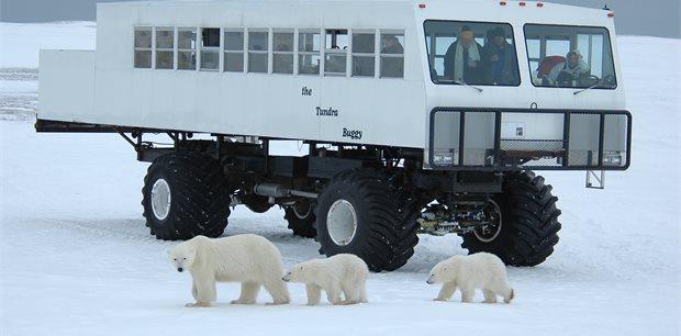 Adventure World Travel | Tundra Buggy Lodge