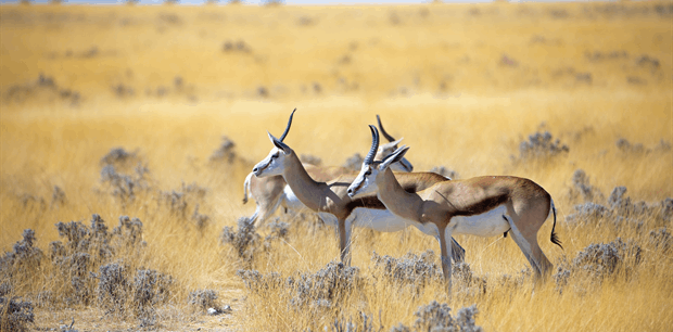 World Journeys   Classic Namibia