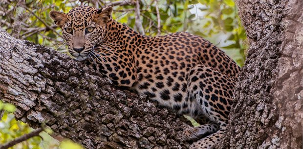 Adventure World Travel | Wildlife of Sri Lanka