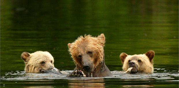 Adventure World Travel | Kodiak Brown Bear Centre