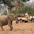 World Journeys | Zambian Walking Safari