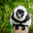 World Journeys | Lemurs & Wildlife
