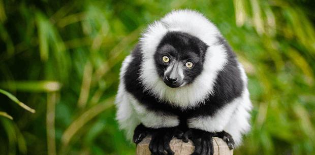 World Journeys | Lemurs & Wildlife