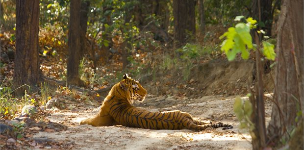 Adventure World Travel | Wildlife of North India