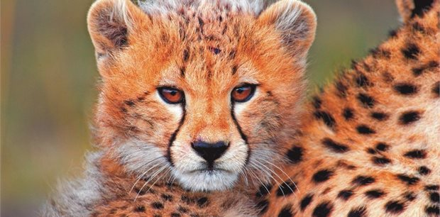 World Journeys | East Africa Safari