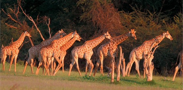 Adventure World Travel | Experience Hwange