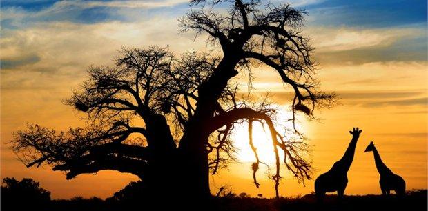 Intrepid | Essential African Safari