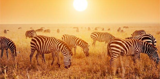 Intrepid | Essential East Africa