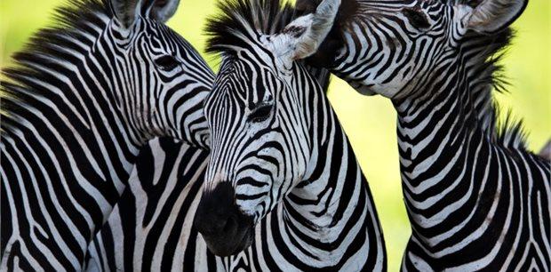 Peregrine | Classic Africa Safari