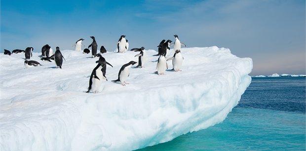 Peregrine - Antarctica Tours