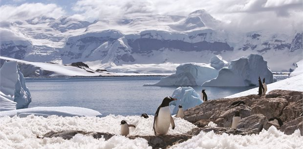 Peregrine | Antarctic Explorer: From Buenos Aires 11 day
