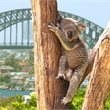 Sydney with Air New Zealand