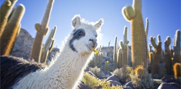 World Journeys   Bolivia Unveiled