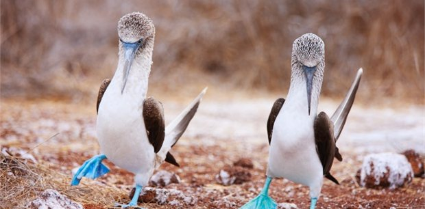 Viva Expeditions | Galapagos Seaman Cruise