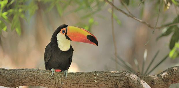 Adventure World Travel | Handpicked Costa Rica