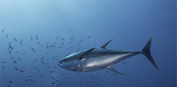 travel&co. | Fish Munda | Solomon Islands