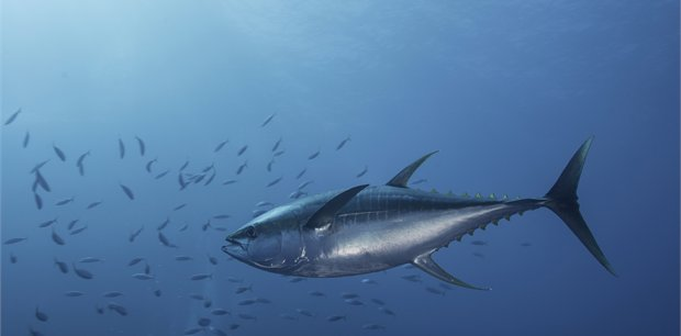 travel&co.   Fish Munda – Solomon Islands