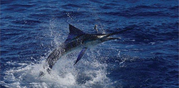 travel&co. | Fish Tonga