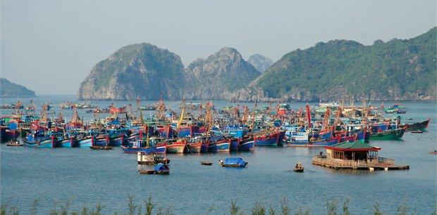 Cosmos | Simply Vietnam