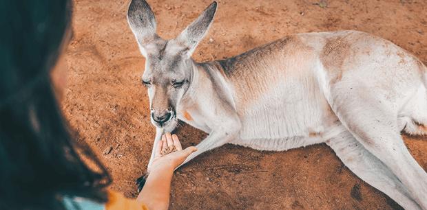 Iconic Australian Experiences