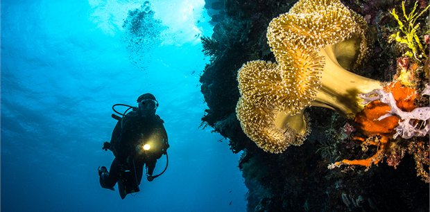 travel&co.   Dive Wakatobi Package, Indonesia