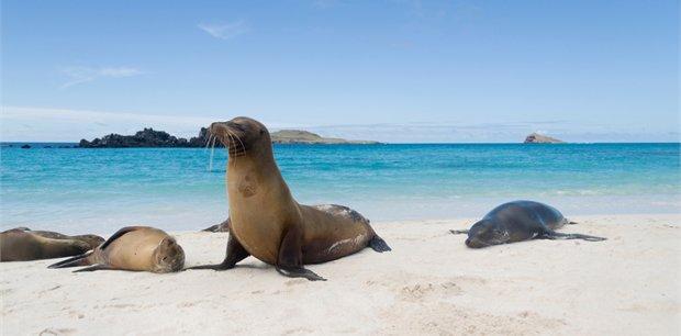 Peregrine | Treasures of the Galapagos: Western & Central Islands (Grand Queen Beatriz)