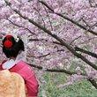 Cosmos | Journey Through Japan