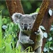 Melbourne | Phillip Island & Wildlife