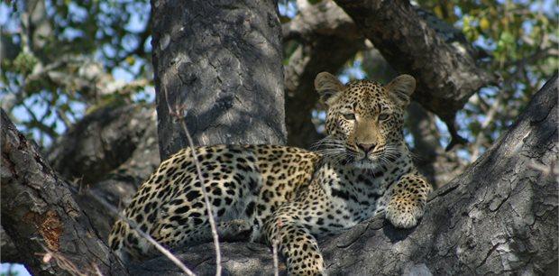 World Journeys | Wild Kingdoms | South Africa