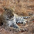 World Journeys | Southern Africa Highlights