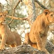 Adventure World Travel | Makutsi Classic Safari