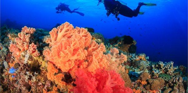 travel&co. | Dive Sipidan, Malaysia