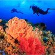 travel&co. |Dive Sipadan | Malaysia