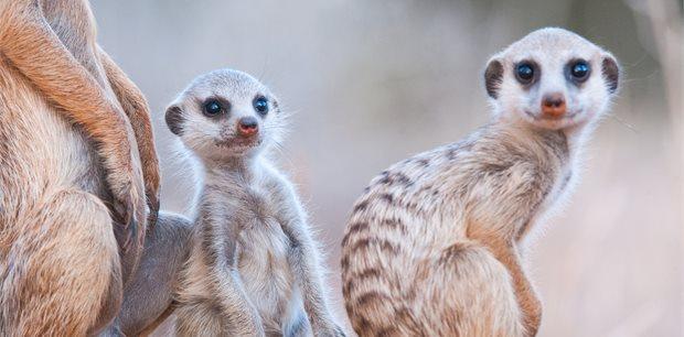 World Journeys | Kalahari & Cape Delight | South Africa