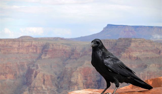 Blog: Grand Canyon – a Natural Wonder of the World
