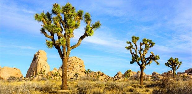 Adventure World Travel | Desert Dreams