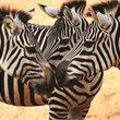 Adventure World Travel | Kenya Classic
