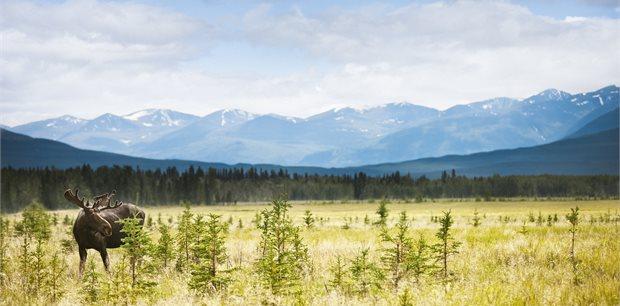 Adventure World Travel   Discover Yukon & NWT