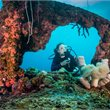 travel&co. | Dive Palau Package |Micronesia